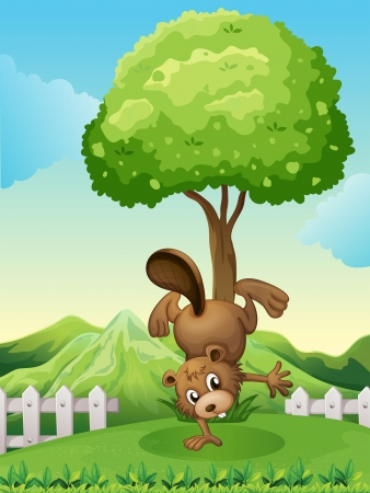 Illustration of a beaver doing a handstand at the hilltop Stock Vector - 22404664