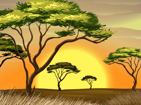 Illustration of a sunset view at the forest
