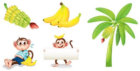 バナナと白い背景の上に空の看板とサルのイラスト