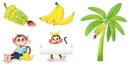 Illustration of the bananas and monkeys with an empty signboard on a white background Ilustrace