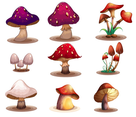 gills: Illustration of the different kinds of mushrooms on a white background Illustration