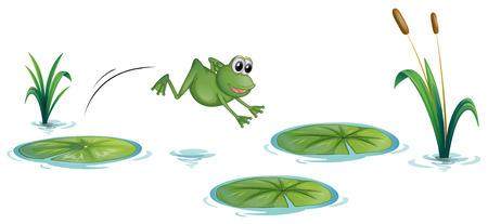 langosta: Ilustración de una rana en el estanque con nenúfares en un fondo blanco
