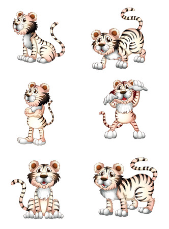 Illustration of the tigers in six different positions on a white background Vector