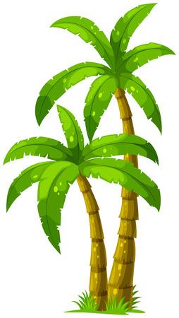 houtsoorten: Illustratie van de twee palmbomen op een witte achtergrond Stock Illustratie