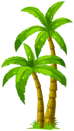 Illustration of the two palm trees on a white background Vector