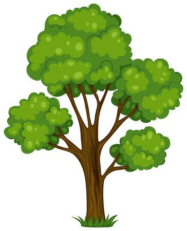 흰색 배경에 키가 큰 나무의 그림 일러스트