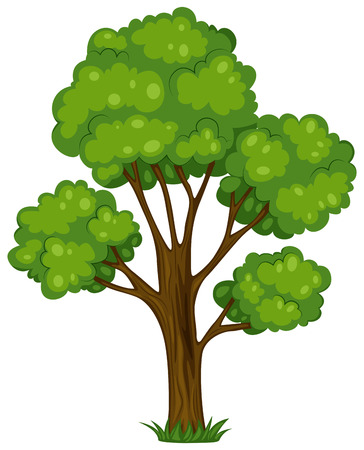 cartoon trees: Illustration of a tall tree on a white background