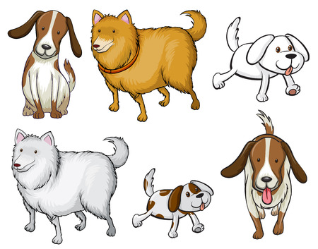specie: Illustration of the different specie of dogs on a white background Illustration