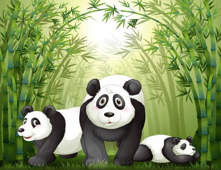 Illustration of the three big bears at the rainforest Vector