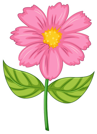 stalk flowers: Illustration of a pink flower on a white background Illustration