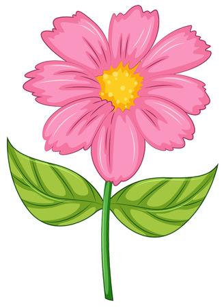 flor caricatura: Ilustración de una flor rosa sobre un fondo blanco