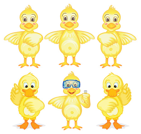 duckling: Illustration of the six ducklings on a white background