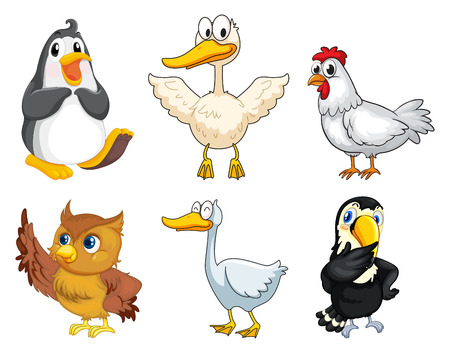 animal: Illustration of the six different kinds of birds on a white background Illustration