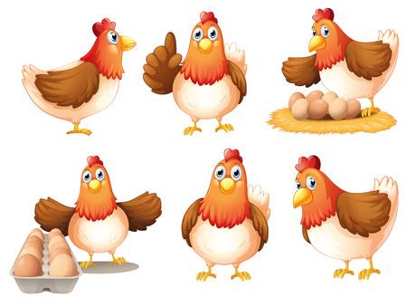 Illustration der Hühner mit Eiern auf einem weißen Hintergrund