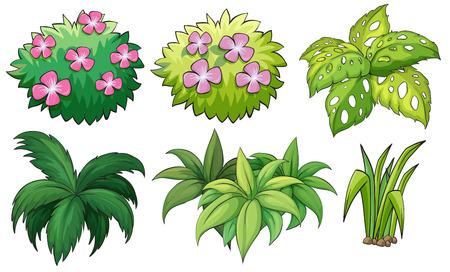 白い背景の上の六つの観賞用植物のイラスト