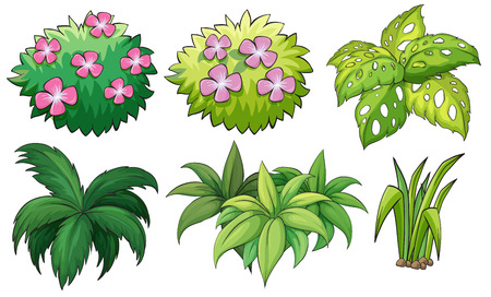 houseplant: Illustration of the six ornamental plants on a white background