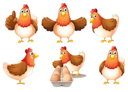 pollo caricatura: Ilustración de un grupo de gallinas gordas sobre un fondo blanco
