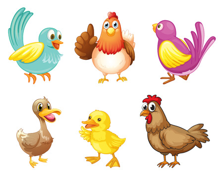 red hen: Illustration of the different kind of birds on a white background Illustration