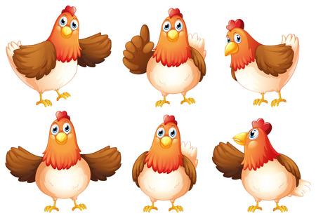 白い背景の上 6 の脂肪の鶏のイラスト  イラスト・ベクター素材