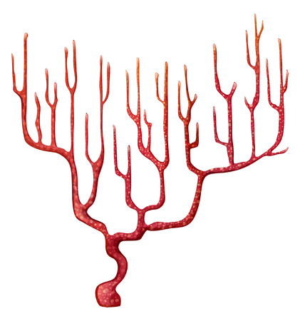 algae: Illustration of a red coral on a white