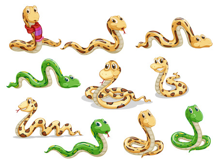 Illustration of a group of voluptous snakes on a white background