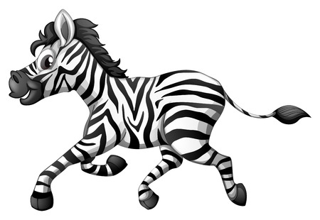 zebra: Illustration of a zebra running on a white background