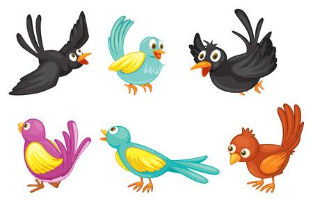 Illustration der sechs bunten Vögel auf einem weißen