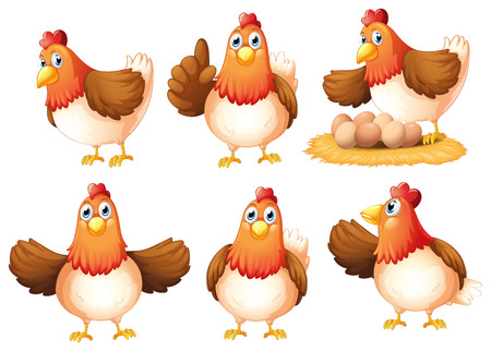 Illustration of the six egg-laying hens on a white background Illustration