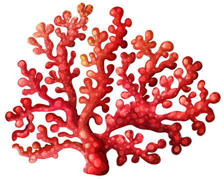 algen: Illustratie van een koraalrif op een witte achtergrond Stock Illustratie