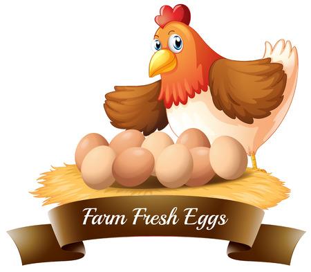 白い背景の上の農場から新鮮な卵のイラスト