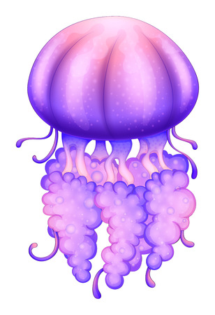jelly fish: Illustration of a lavender jellyfish on a white background