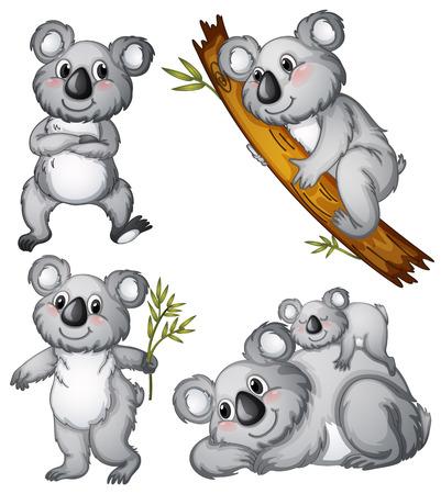 koala: Ilustración de un grupo de koalas en un fondo blanco