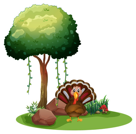 caruncle: Illustration of a turkey near the rocks under the tree on a white background