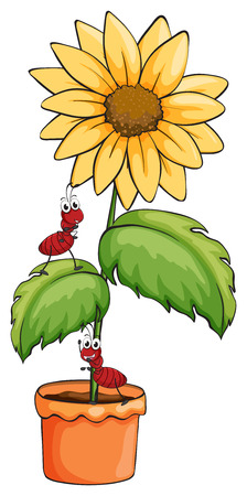crawling creature: Illustration of a sunflower with two ants on a white background