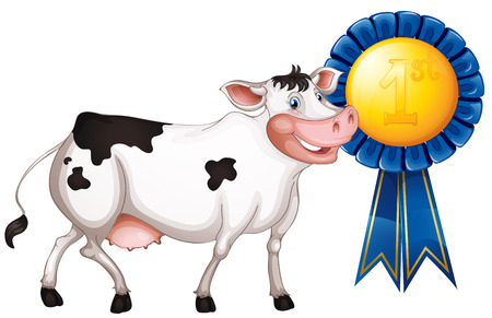 milking: Illustration of a cow with a first prize ribbon on a white background