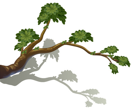 Illustration of a branch of a tree  isolated on white  Vector