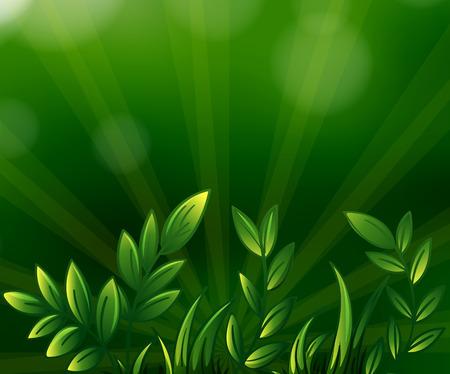 elongated: Illustration of the green leafy plants Illustration