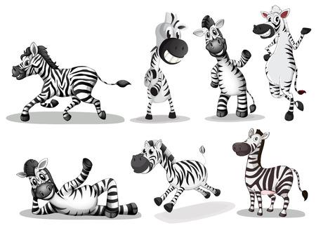 Ilustración de las cebras juguetones sobre un fondo blanco