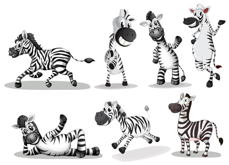 Illustration of the playful zebras on a white background Illustration