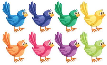 chirp: Illustration of the eight colorful birds on a white background Illustration