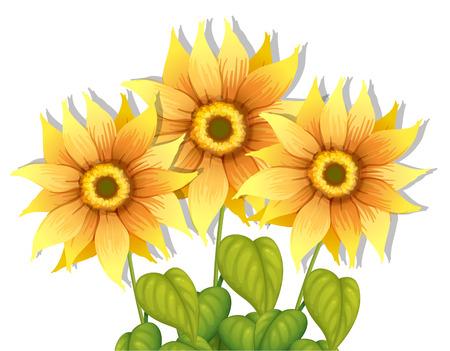Illustratie van de bloeiende zonnebloemen op een witte achtergrond Stock Illustratie
