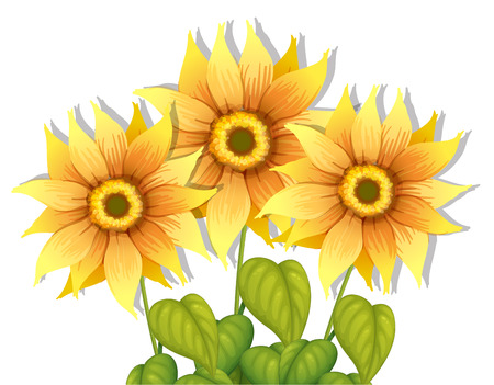 Illustration of the blooming sunflowers on a white background
