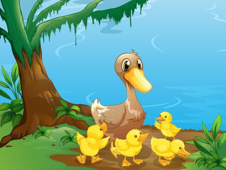 강둑: 강둑에서 오리와 그녀의 새끼 오리의 그림 일러스트