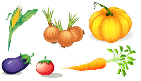 Illustration of the healthy vegetables and spices on a white background Illustration