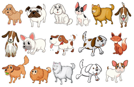 dingo: Illustration of the different breeds of dogs on a white background