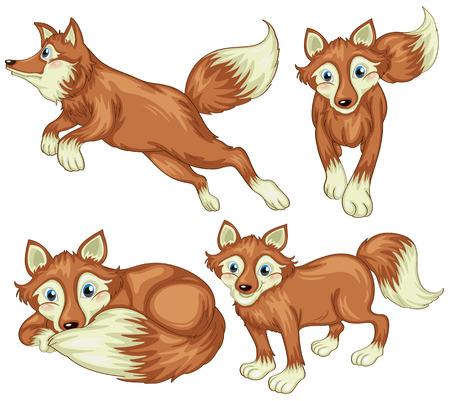 zorros: Ilustraci�n de los cuatro zorros en un fondo blanco Vectores