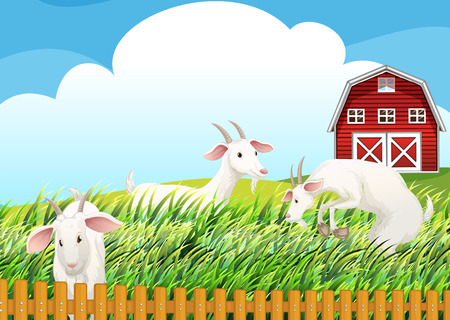 Illustration of a farm with three goats Vector
