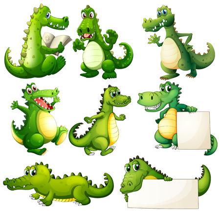 krokodil: Illustration der acht be�ngstigend Krokodile auf einem wei�en Hintergrund Illustration