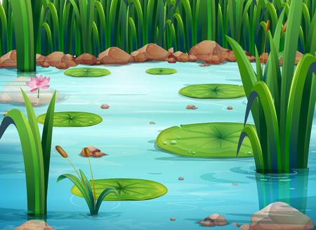 Illustration of a pond with green plants Illustration