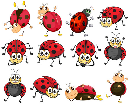 cartoon bug: Illustration of the cute ladybugs on a white background
